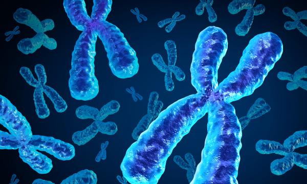 Genetic Screening Test (PGD)